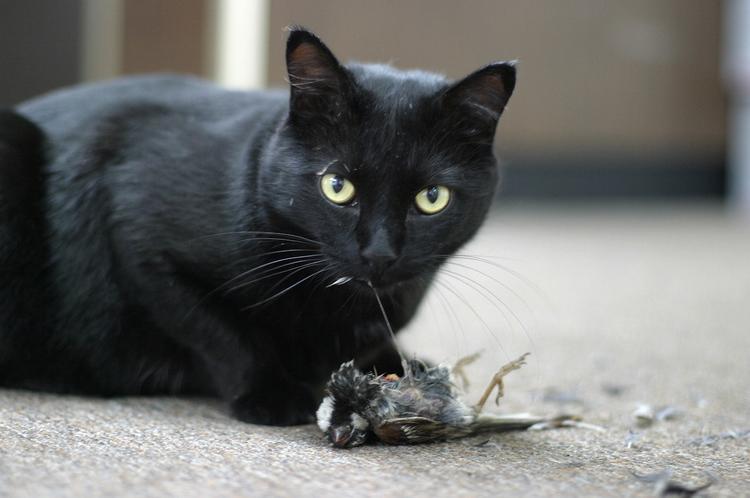 cat-eating-prey