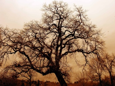 gnarled-old-oak-1166907_1920
