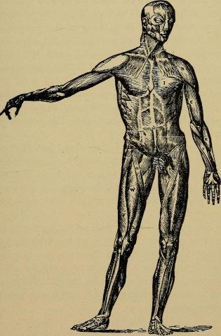 Skinless dude