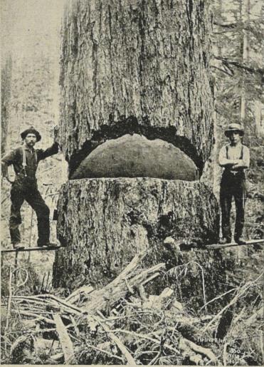 Lumberjacks cerca 1900