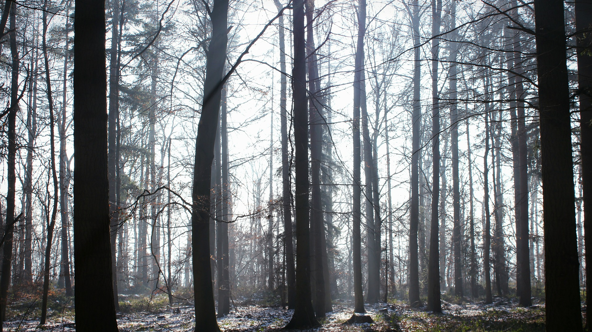 forest-2000030_1920