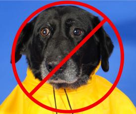 Raincoat dog