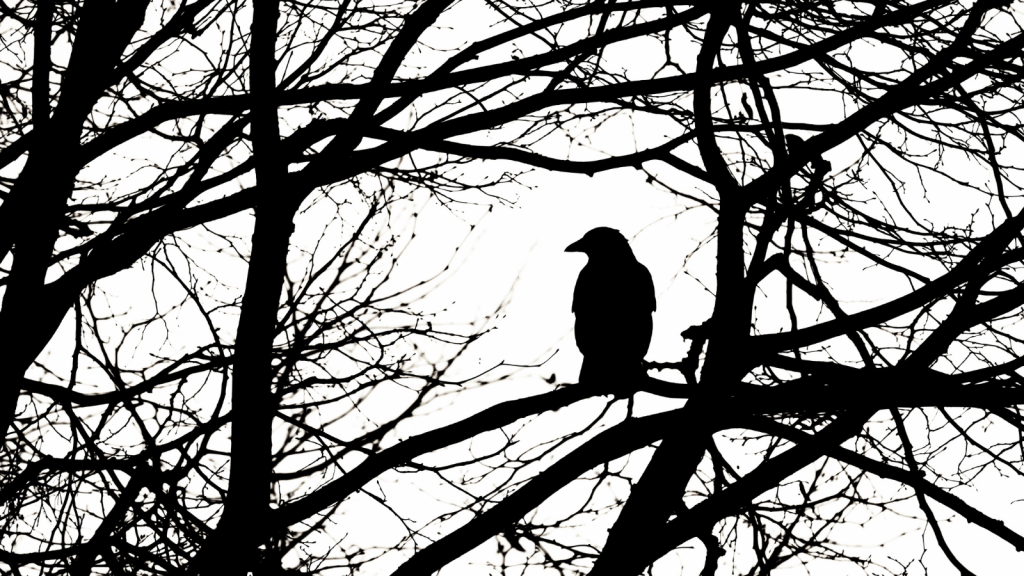 Raven in trees